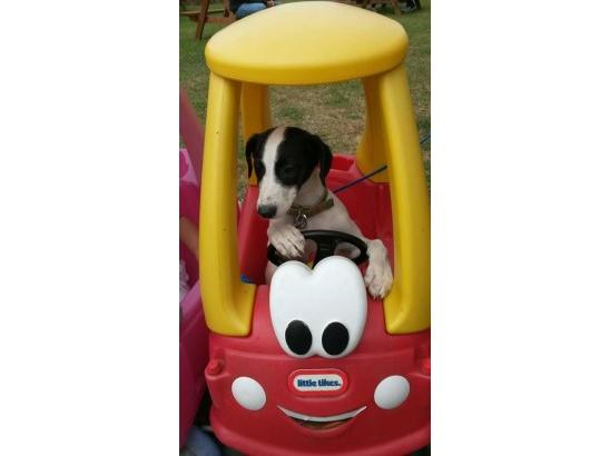 Tilly learning to drive