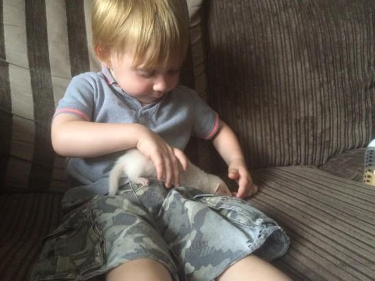 JJ at 2 and a half with his first ferret