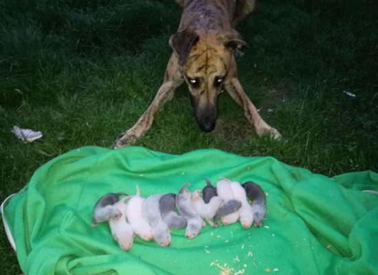 Brindle meeting the kits