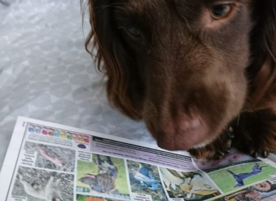 archie looking at himeself in the paper