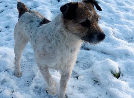\'Jack\'. After a stroll in the snow last year