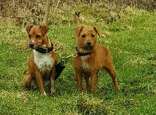 Milly and milace out ferreting