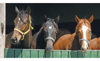 Hunting Horses